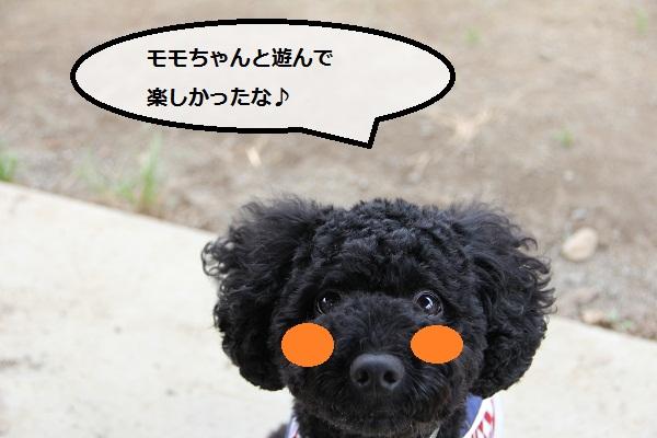 35_20120913230620.jpg