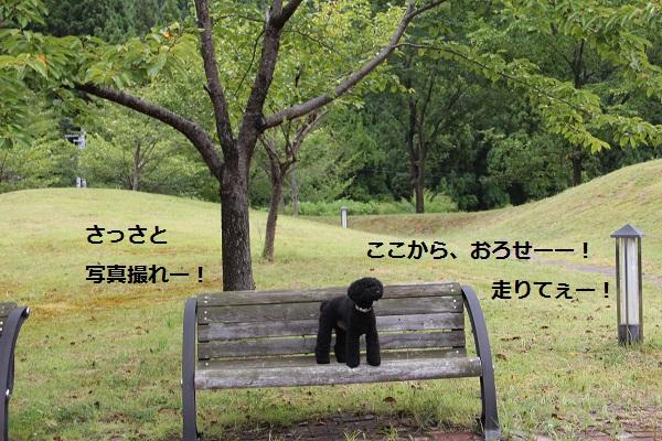39_20120904225306.jpg