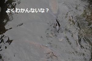 40_20120915213015.jpg