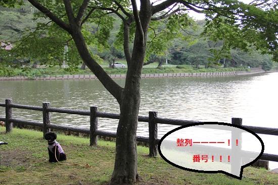 42_20120915213155.jpg