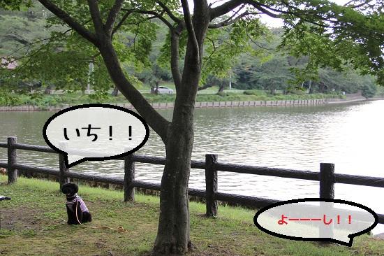 43_20120915213227.jpg