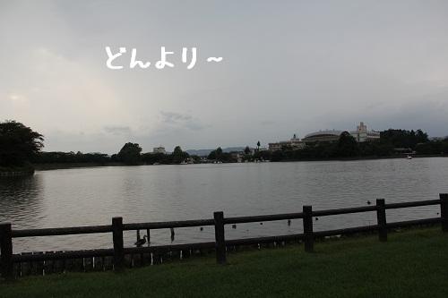 44_20120915213248.jpg