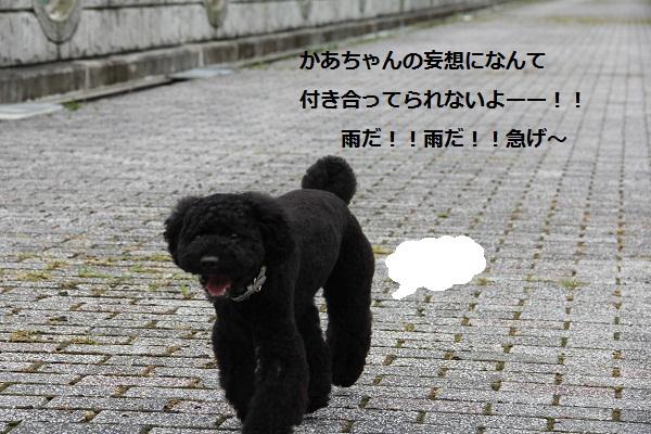 45_20120904230911.jpg