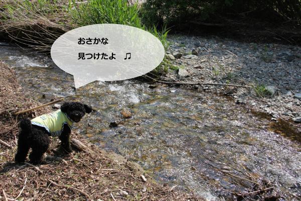 70_convert_20120609004359.jpg