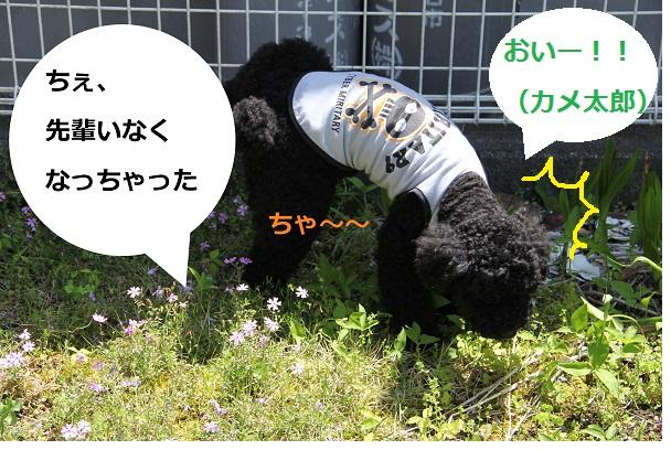 IMG_452323.jpg