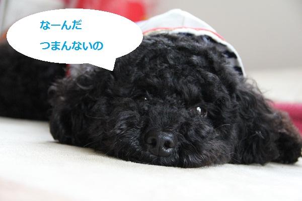 IMG_530023.jpg