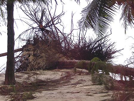 2009年10月4日今日のマイクロビーチ3