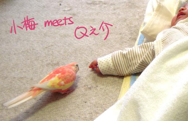 koume-meets-qnosuke.jpg