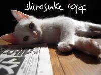sirosuke.jpg