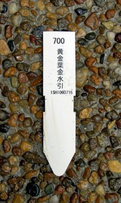 CIMG5203-20060725.jpg