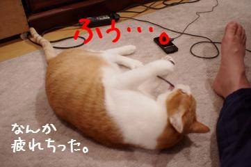 10_20101228201217.jpg