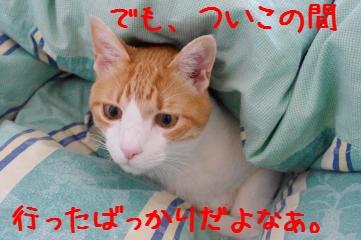 13_20100424154922.jpg