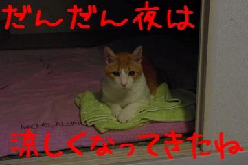 1_20100824205130.jpg