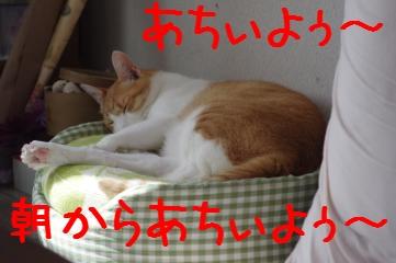 1_20101011093041.jpg
