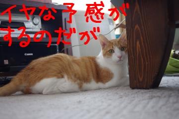1_20101016164359.jpg