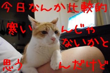 1_20101026200919.jpg