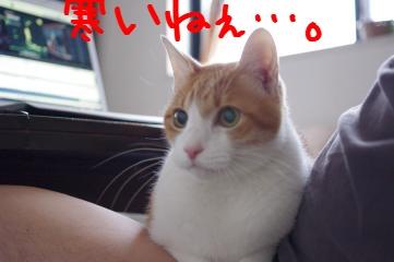 1_20101030133937.jpg