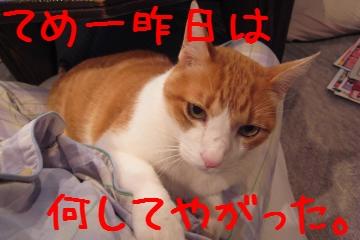 1_20101201204504.jpg
