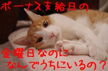 1_20101210202434.jpg