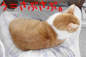 1_20101219101940.jpg