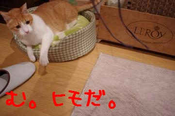 1_20101228201151.jpg