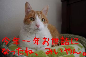 1_20101231180719.jpg