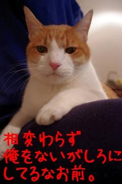 1_20110117231542.jpg