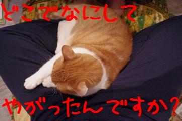 1_20110126224241.jpg