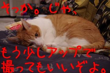 1_20110128205631.jpg