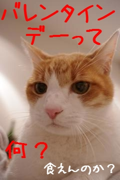 1_20110214205759.jpg