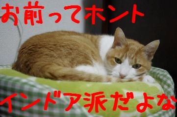 1_20110226174153.jpg
