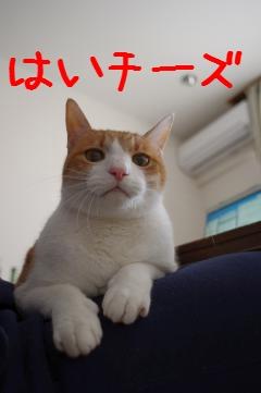 1_20110305085428.jpg