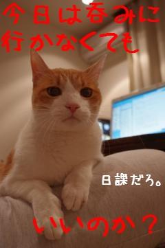 1_20110309210215.jpg