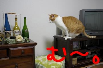 1_20110323210332.jpg