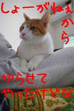 1_20110326081256.jpg