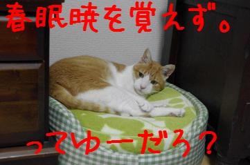 1_20110403181852.jpg