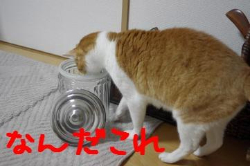 1_20110410185757.jpg