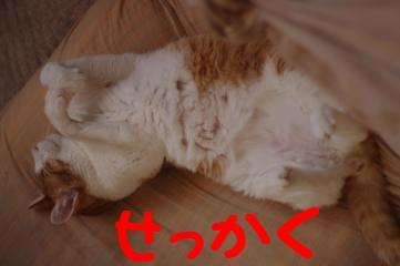 2_20100428193855.jpg