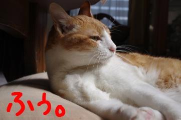 2_20100515224013.jpg