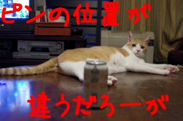 2_20100801213901.jpg