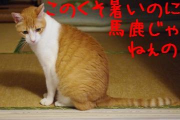 2_20100814220122.jpg