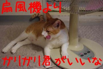 2_20100821210100.jpg