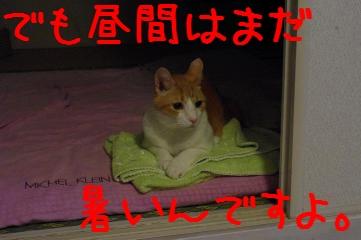 2_20100824205130.jpg