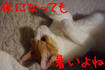 2_20100825220323.jpg