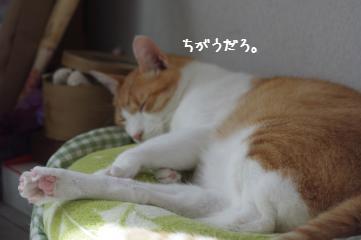 2_20101011093041.jpg