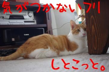 2_20101016164358.jpg