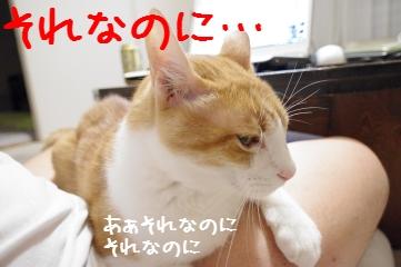 2_20101026200919.jpg