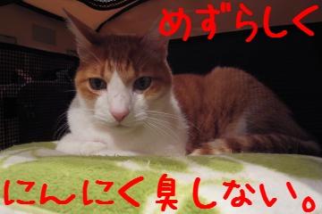 2_20101127205546.jpg