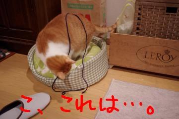 2_20101228201151.jpg