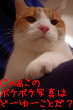 2_20110117231541.jpg